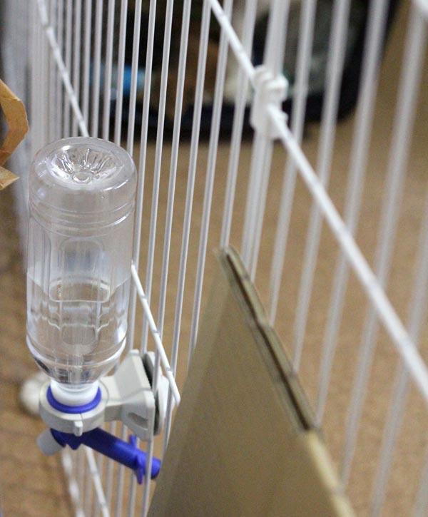 ペットボトル式給水器
