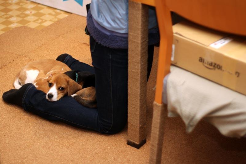 ベッドとしてのふくらはぎ その1