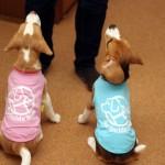 日本盲導犬協会の「チャリティーシャツ」