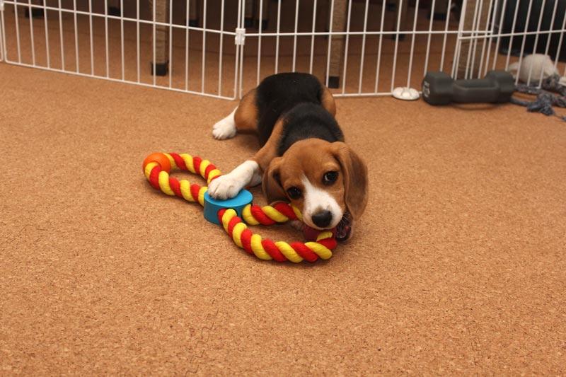 新しいロープのおもちゃ
