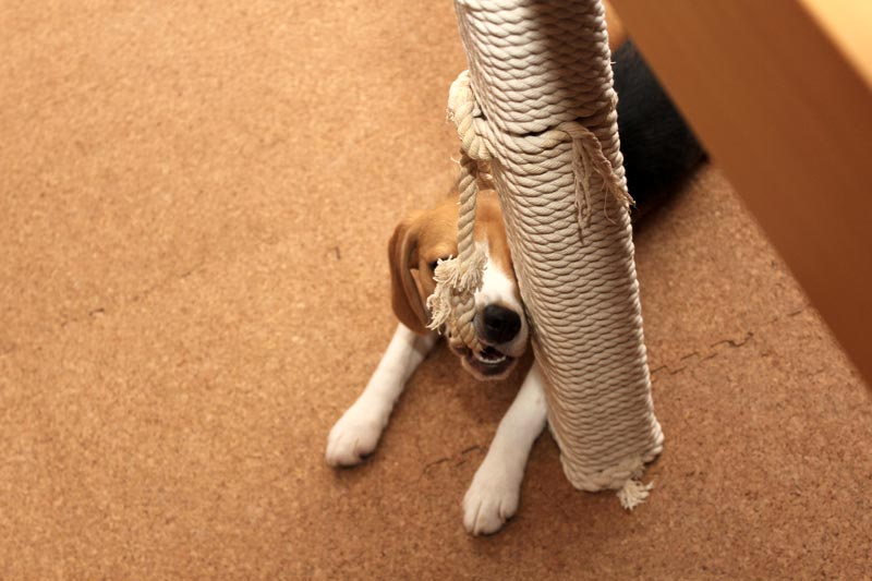 ロープを噛んだまま固まる空豆
