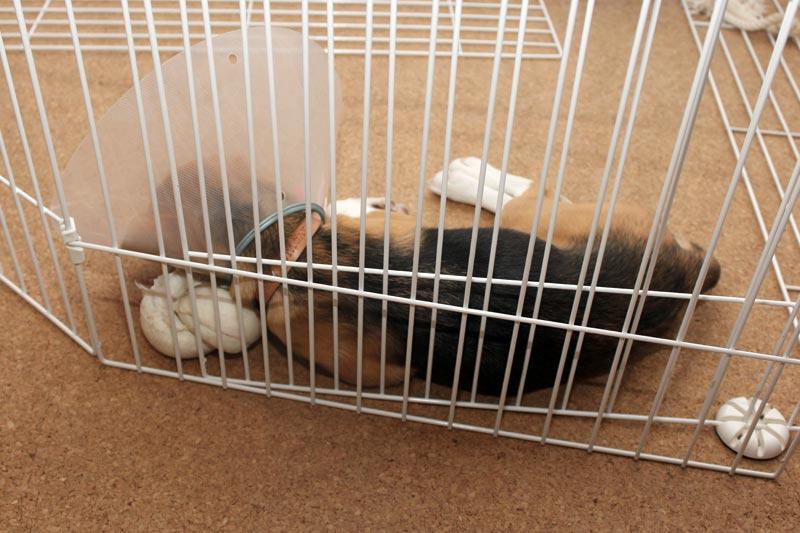 空豆がボーンを枕に寝てる