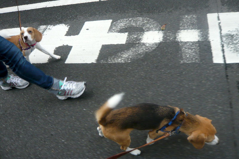 さあ歩こう