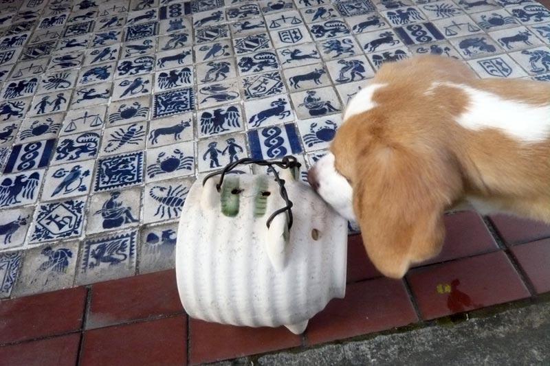 鼻を近づける花豆