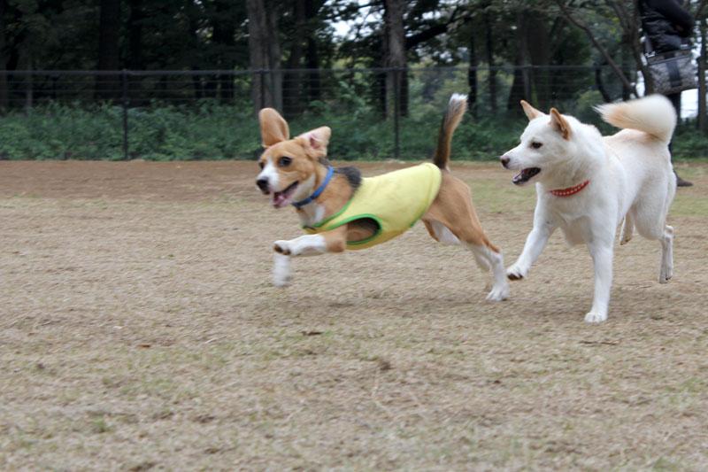 空豆と白い犬