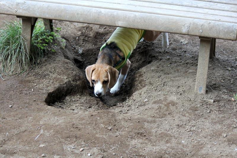 穴に入ってみただけの空豆