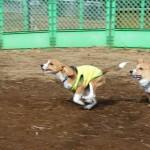 芦花公園ドッグランの新年
