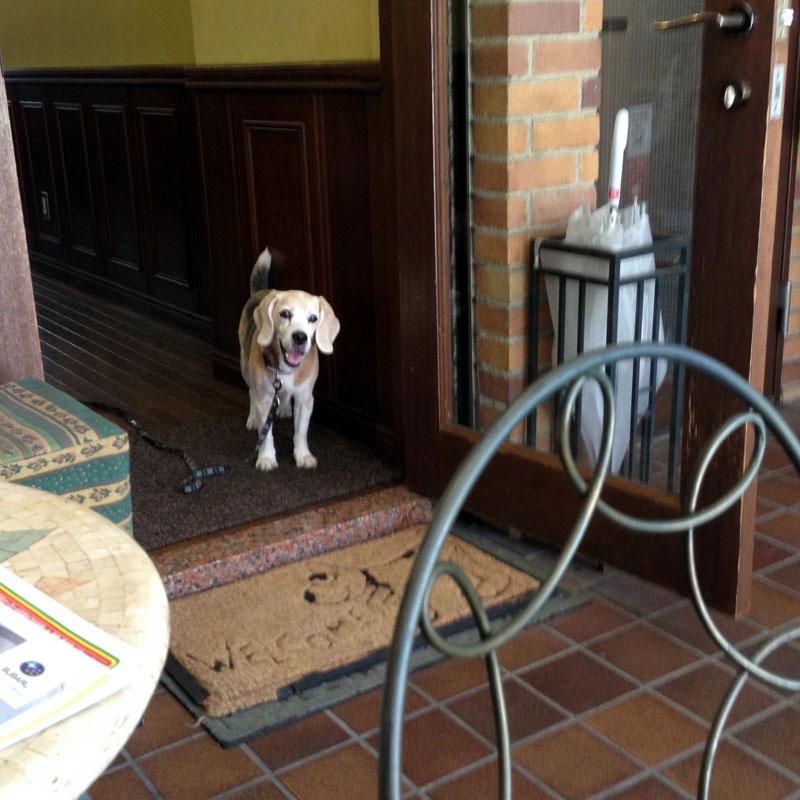 看板犬バジルがお出迎え