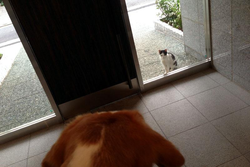 ドアの向こうに子猫が。