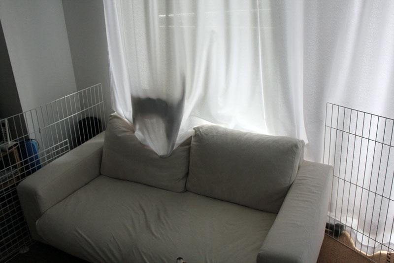 カーテンに黒い影