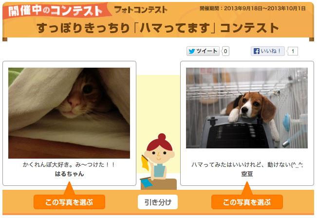 Yahoo!ペットのコンテスト
