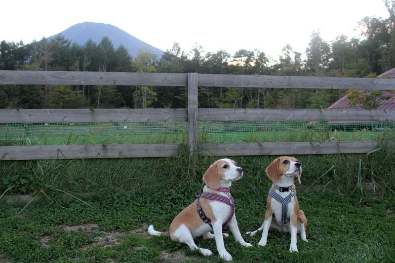 富士山と空と花