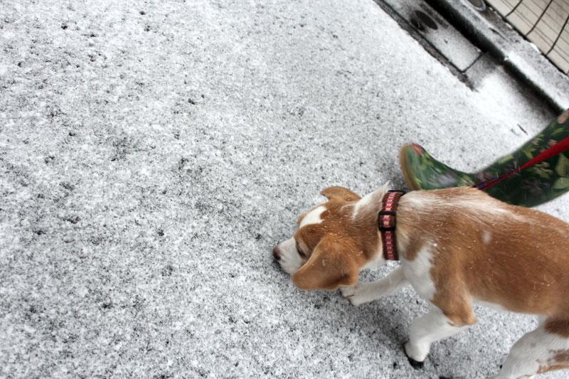 つもり始めた雪