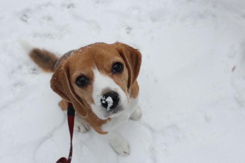 鼻の上に積もる雪