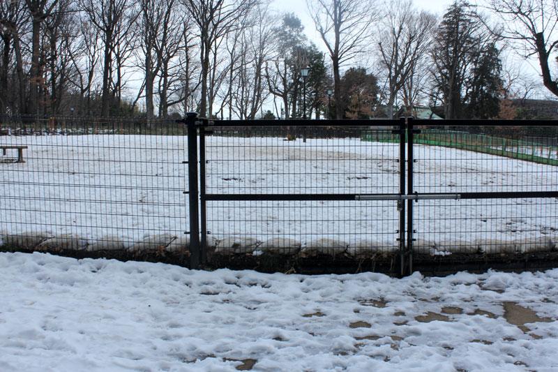 雪だらけの芦花公園ドッグラン