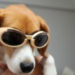 犬用サングラスとかどうでしょうね?