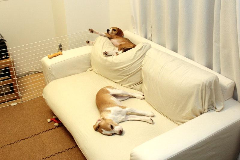 寝る空豆花豆