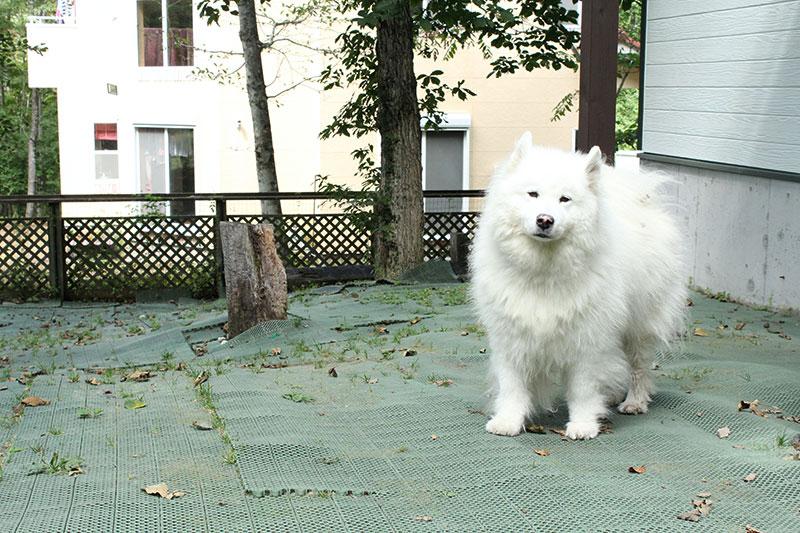 看板犬ニイナちゃん