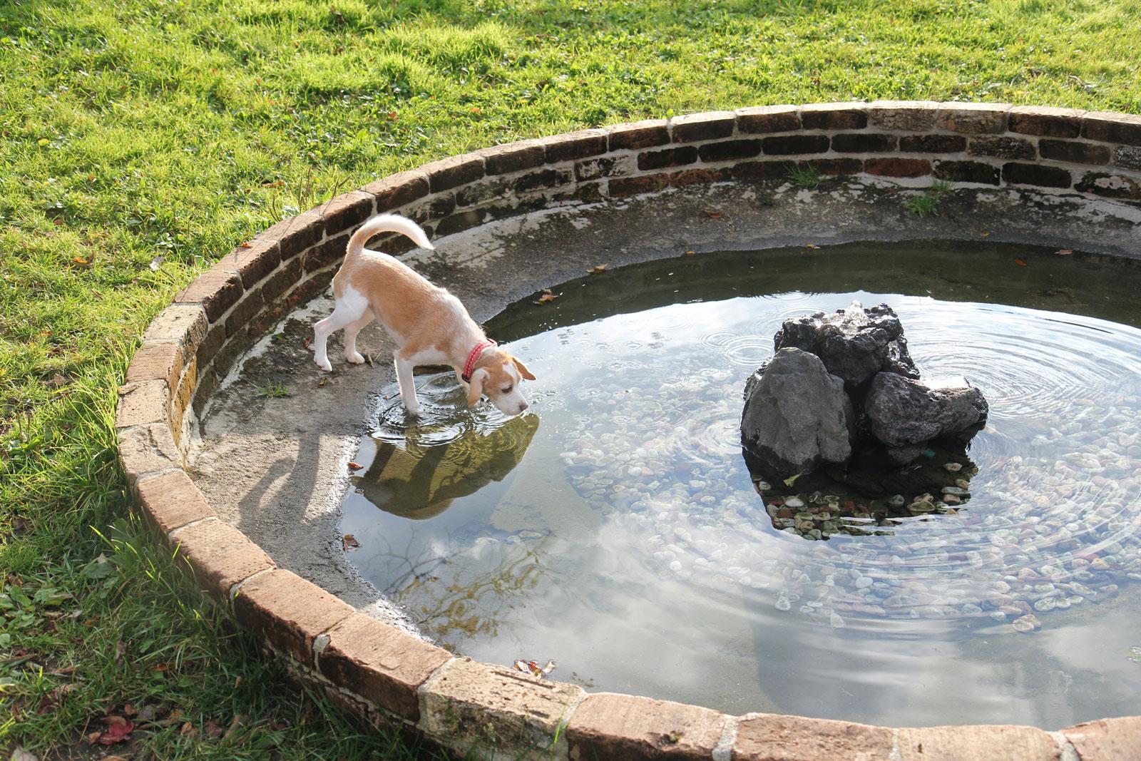 噴水と戦う花豆