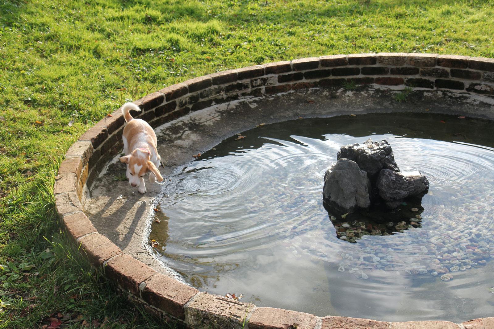 噴水から逃げる花豆