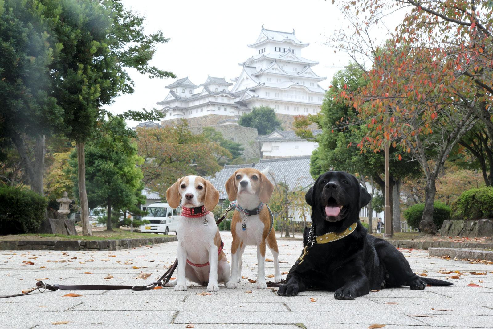 姫路城を背景に
