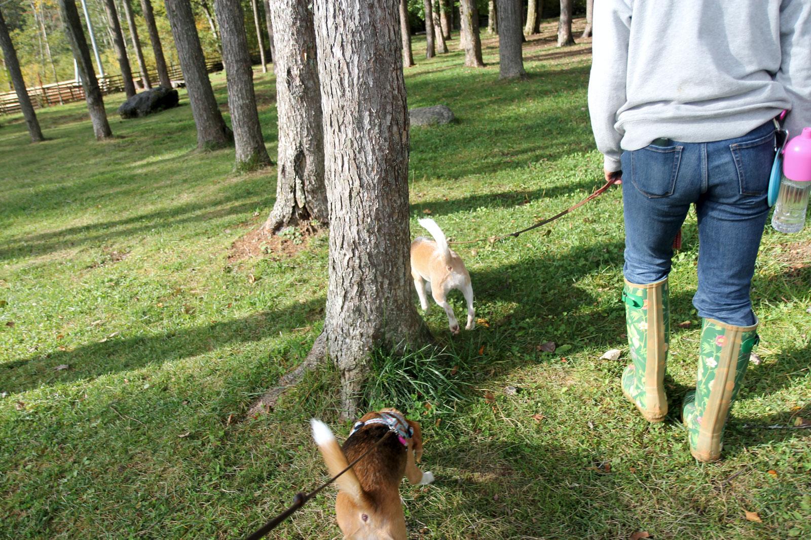 林ランを歩く