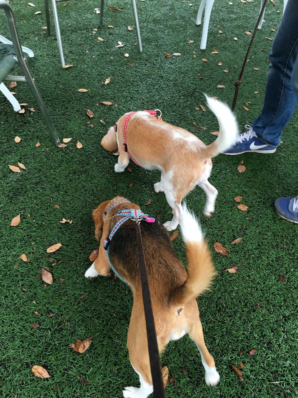 足柄SAの小型犬ドッグラン2