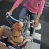 Brunoの自転車に乗るのだ