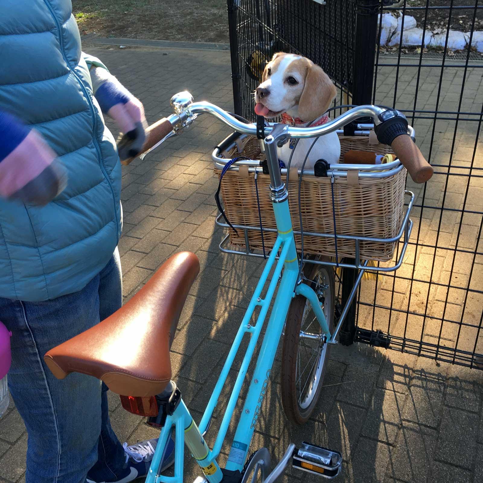 カゴ入り花豆とbrunoの自転車