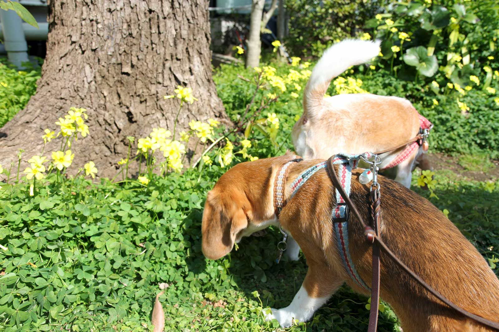 花と鼻の季節