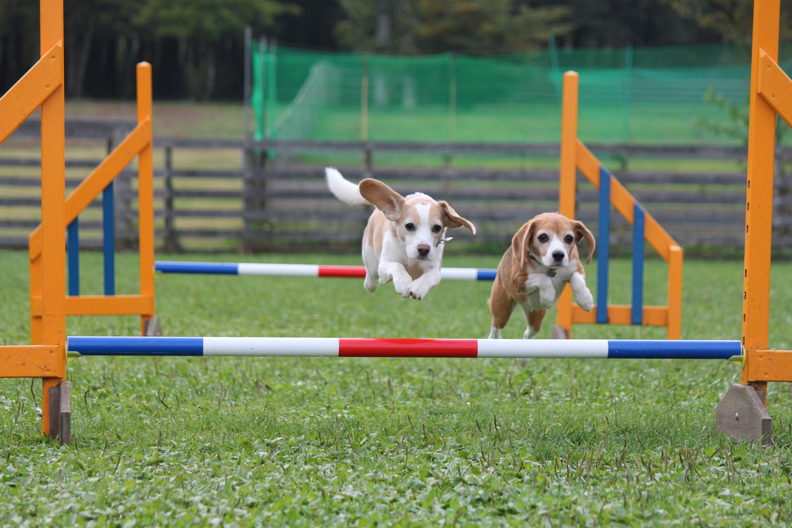 飛行犬たち