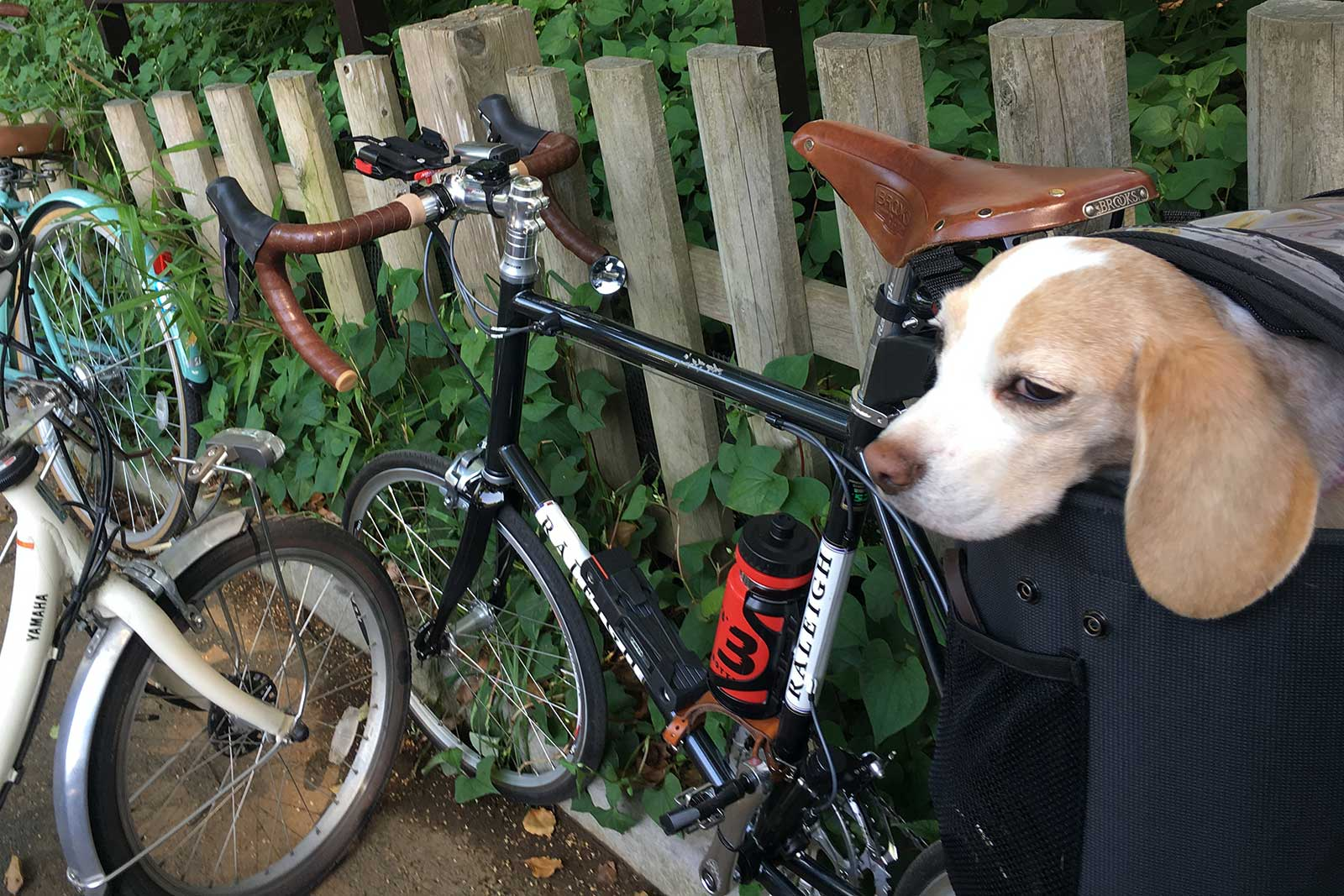 自転車でちょっと代々木公園へ