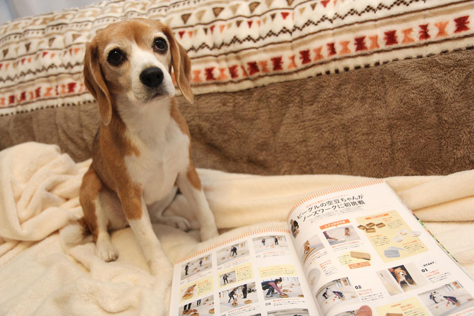 モデル犬空豆