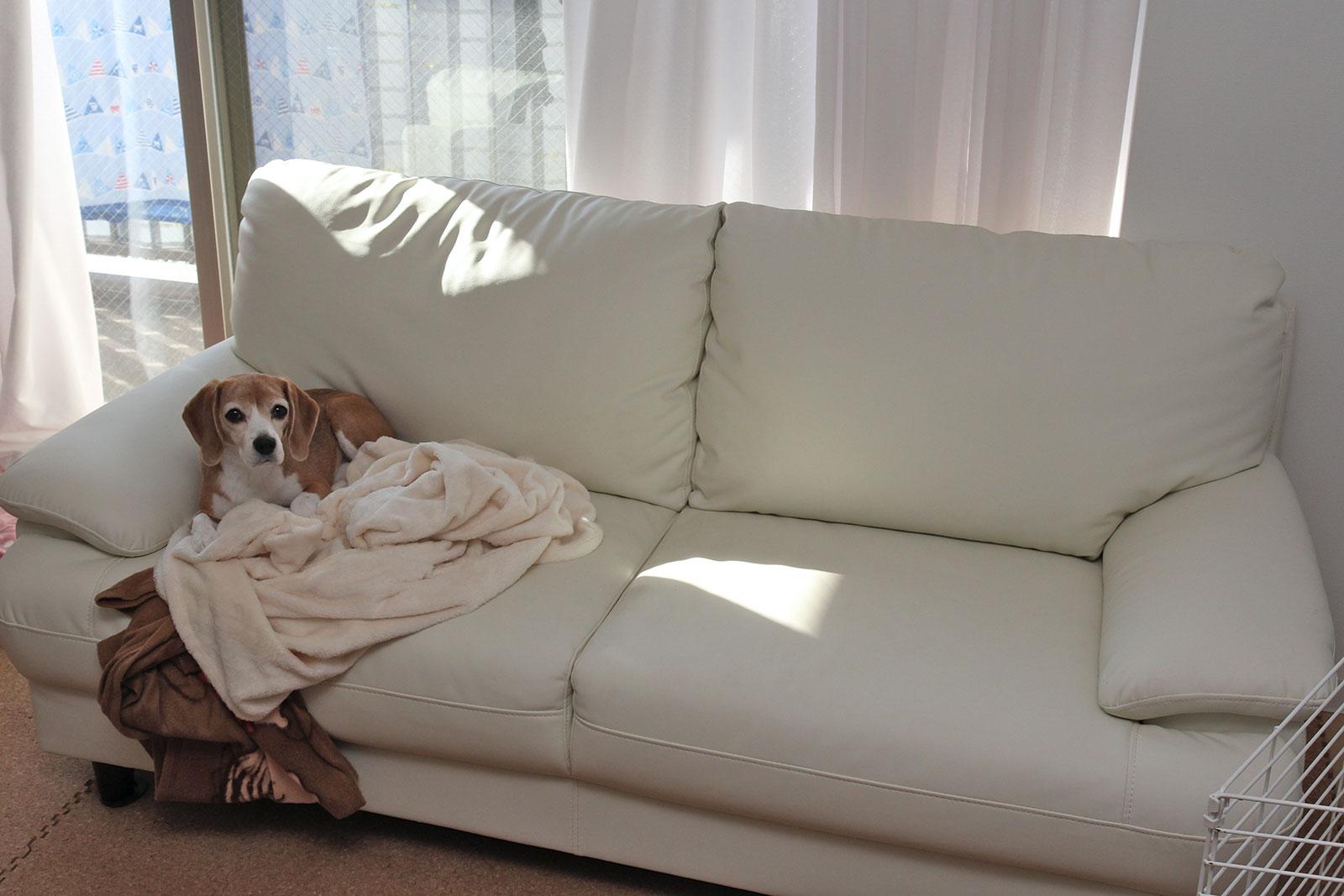 うちのソファ