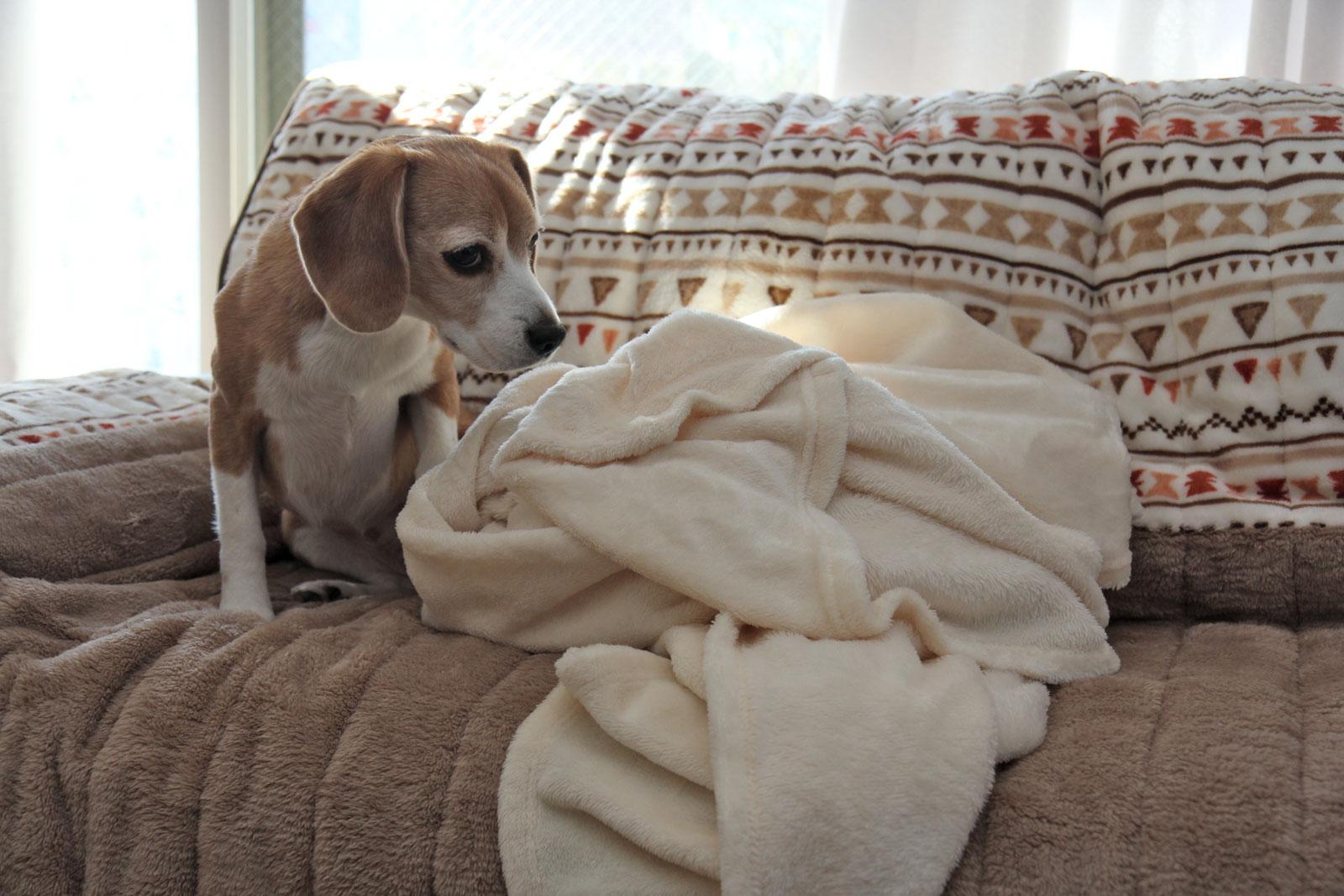 毛布いかがですか