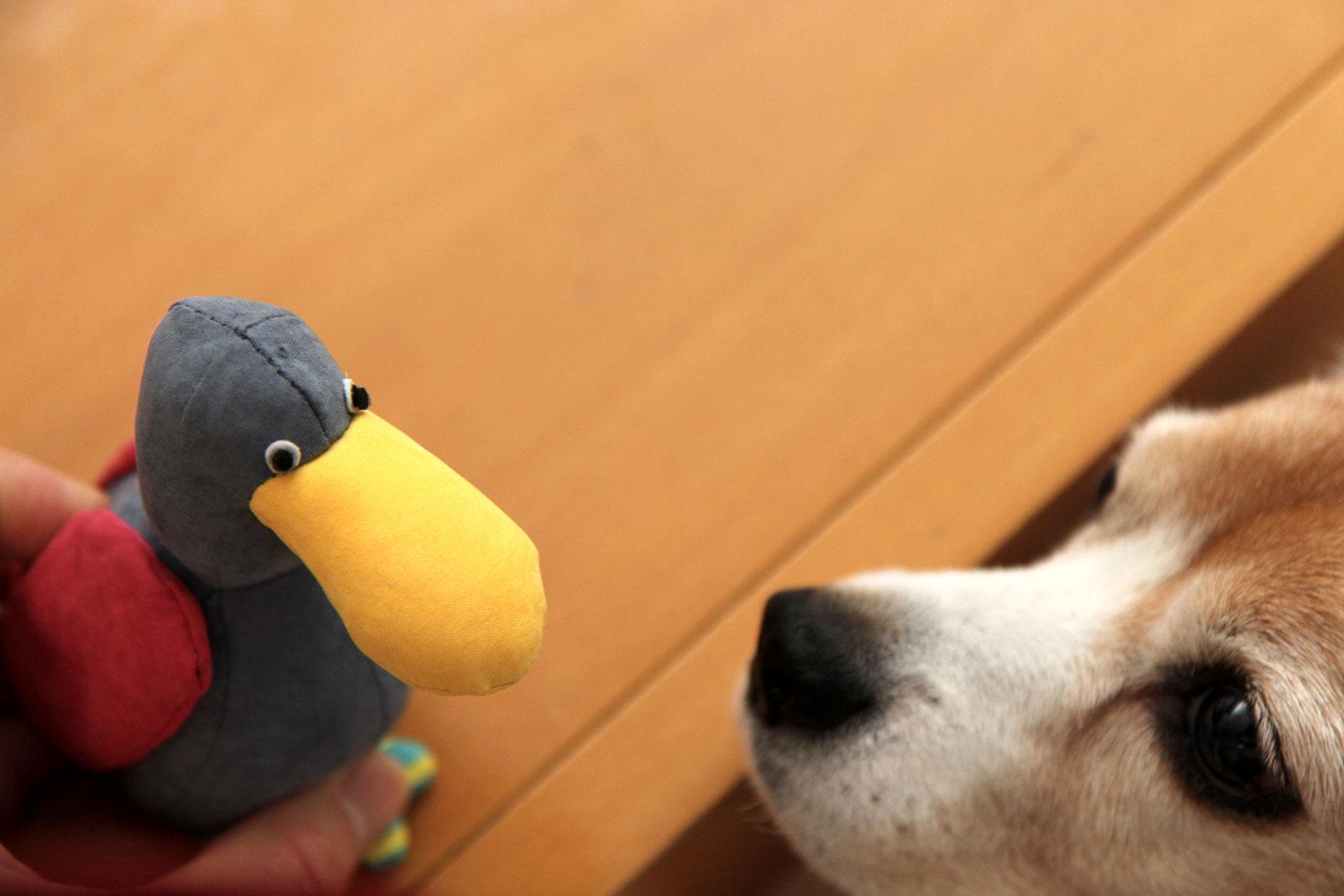 鳥のおもちゃ02