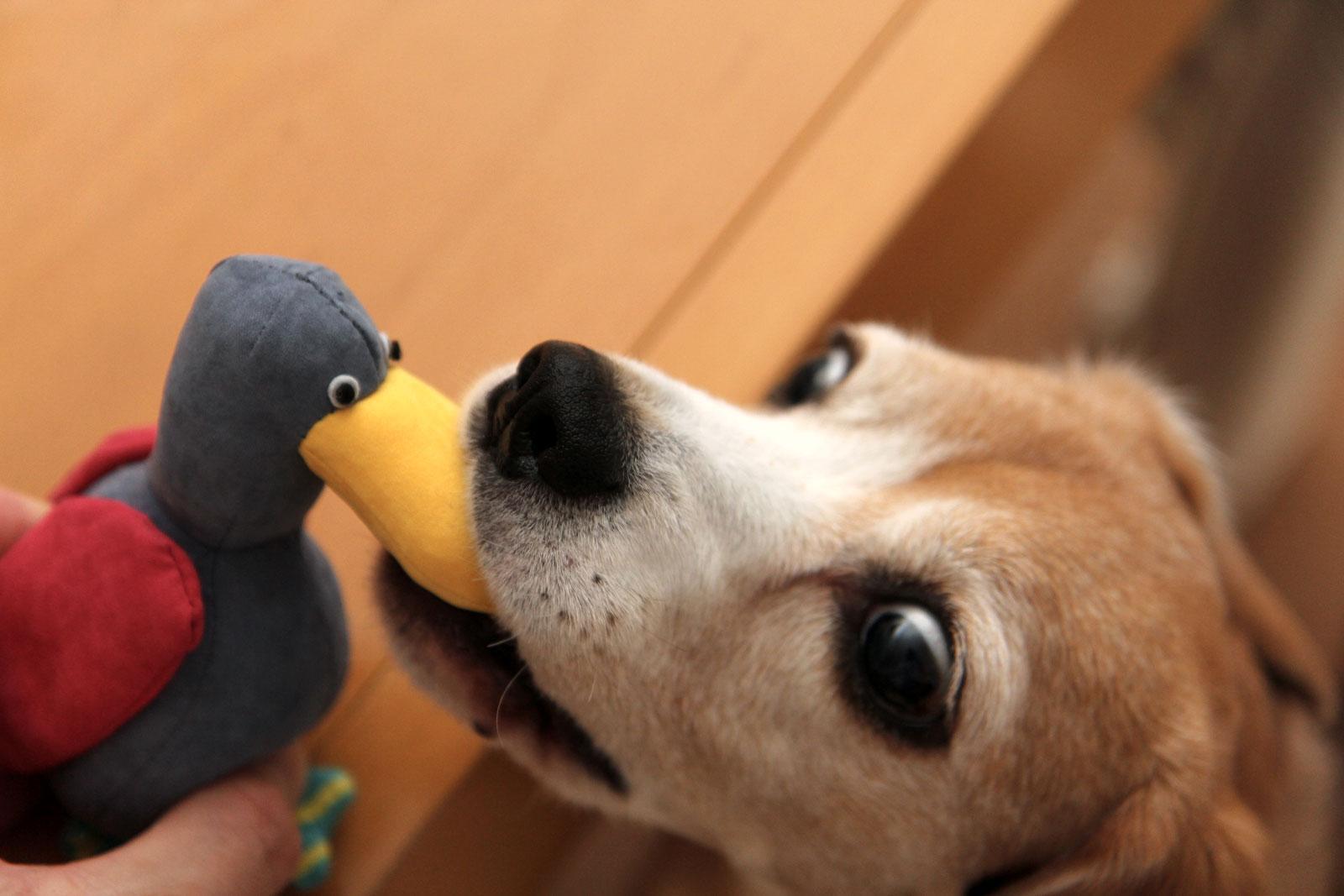 鳥のおもちゃ03