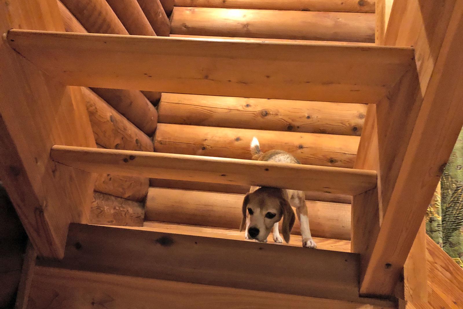 階段が気になる