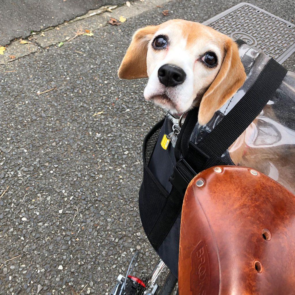 自転車に乗る空豆さん
