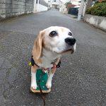 冬のスケボー犬